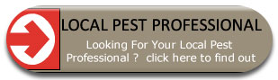 Local Pest Professional